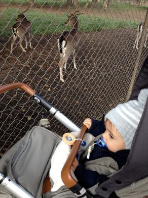 Tiere im Hirschgarten beobachten