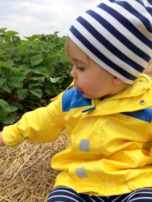 Leo beim Erdbeeressen